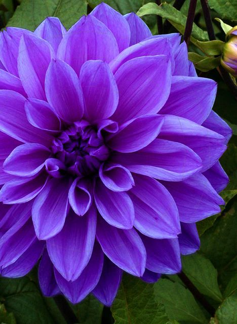 Want To Know About The Most Beautiful Flowers In The World