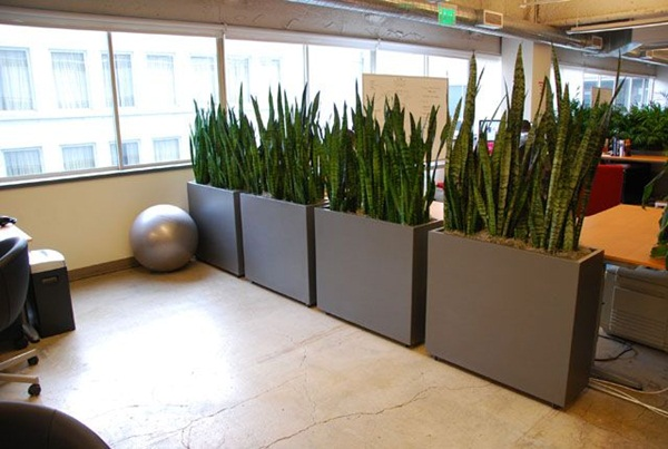 Creative and Fresh Office Plant Decoration Ideas (17)