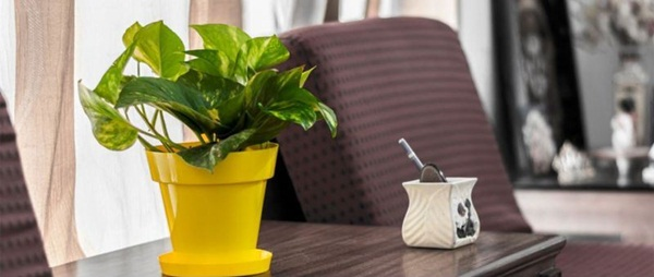 Creative and Fresh Office Plant Decoration Ideas (22)