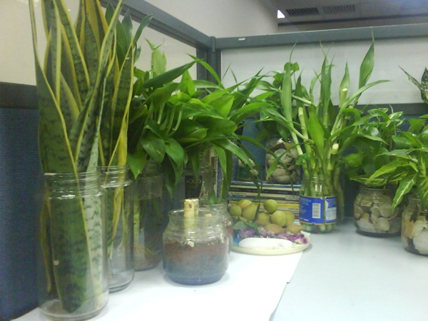 Creative and Fresh Office Plant Decoration Ideas (23)