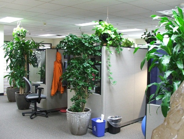 Creative and Fresh Office Plant Decoration Ideas (24)