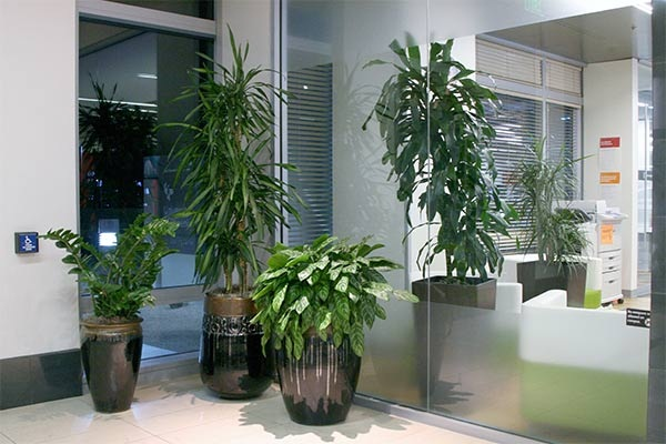 Creative and Fresh Office Plant Decoration Ideas (29)