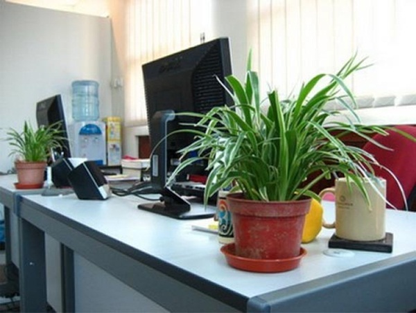 Creative and Fresh Office Plant Decoration Ideas (35)