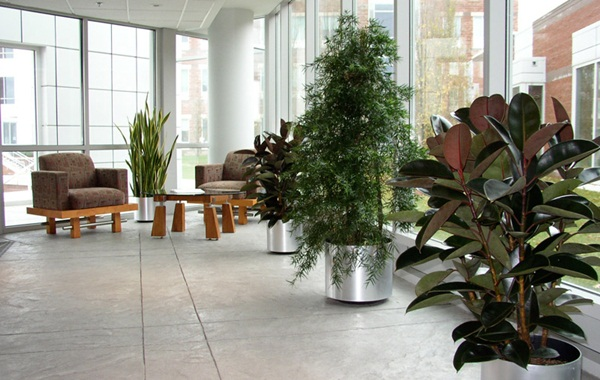 Creative and Fresh Office Plant Decoration Ideas (37)