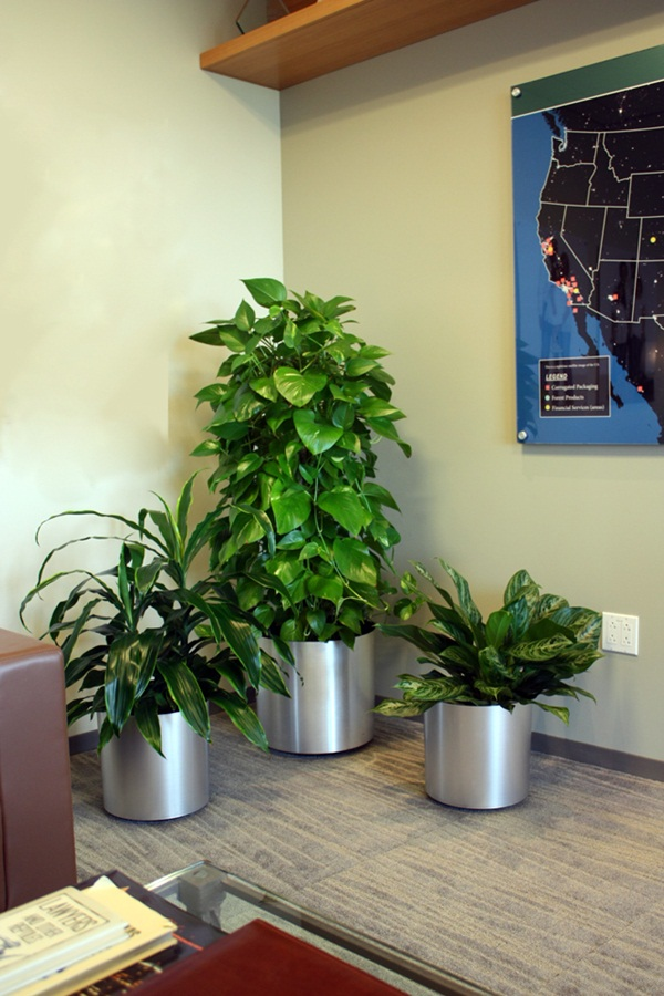 Creative and Fresh Office Plant Decoration Ideas (38)