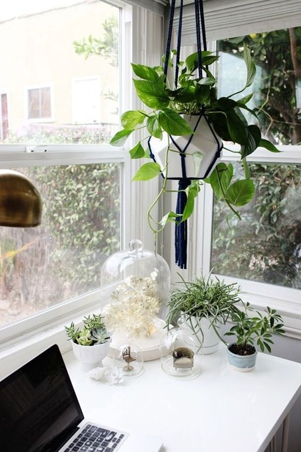 Creative and Fresh Office Plant Decoration Ideas (9)