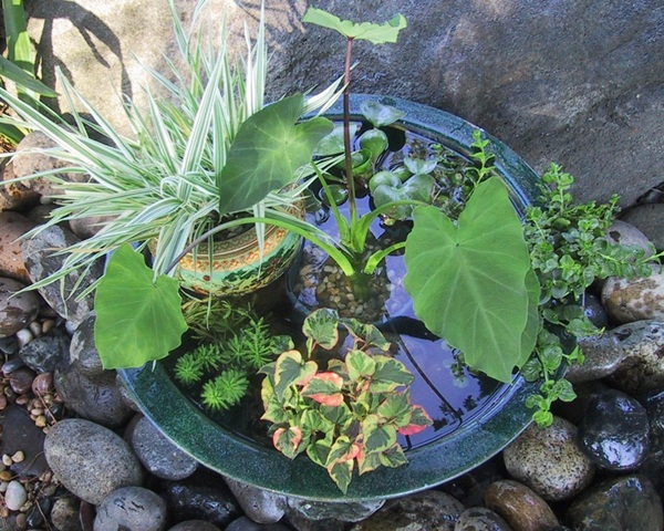 Indoor water garden ideas