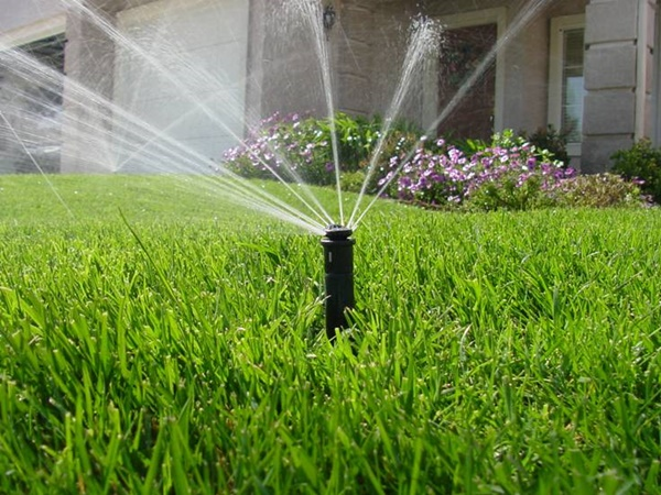 10 Basic Lawn Care Tips 4