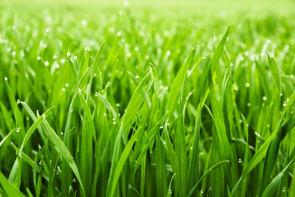 10 Basic Lawn Care Tips 8