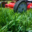 10 Basic Lawn Care Tips Feature Image