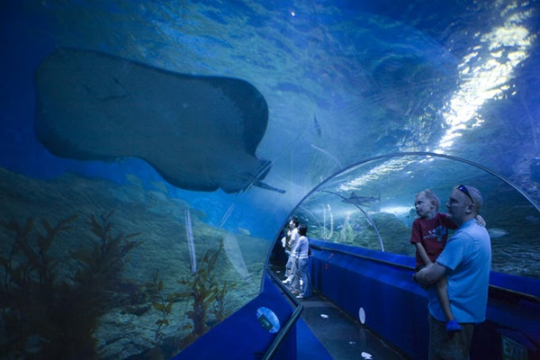10 Largest Aquariums in the World 1