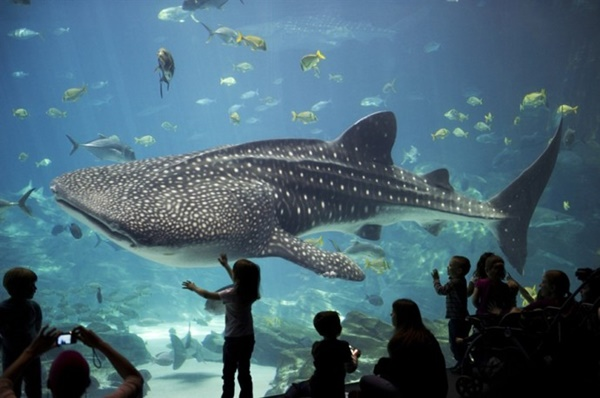 10 Largest Aquariums in the World 10