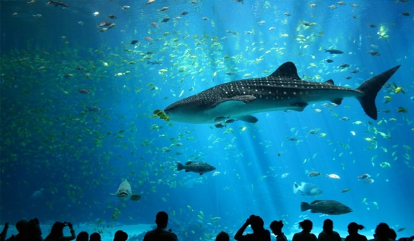 10 Largest Aquariums in the World 6