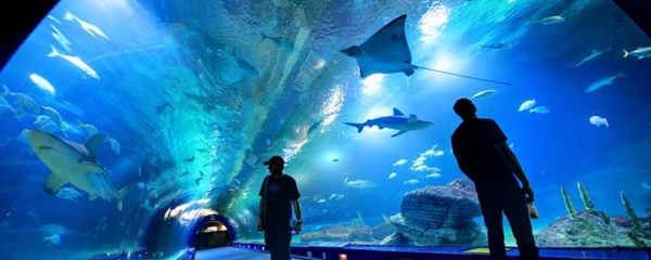 10 Largest Aquariums in the World 7