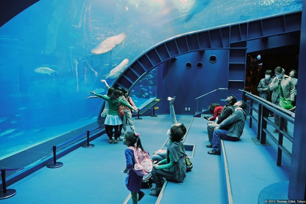 10 Largest Aquariums in the World 8