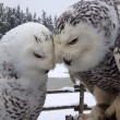 Great Real Owl Pictures to Admire (36)